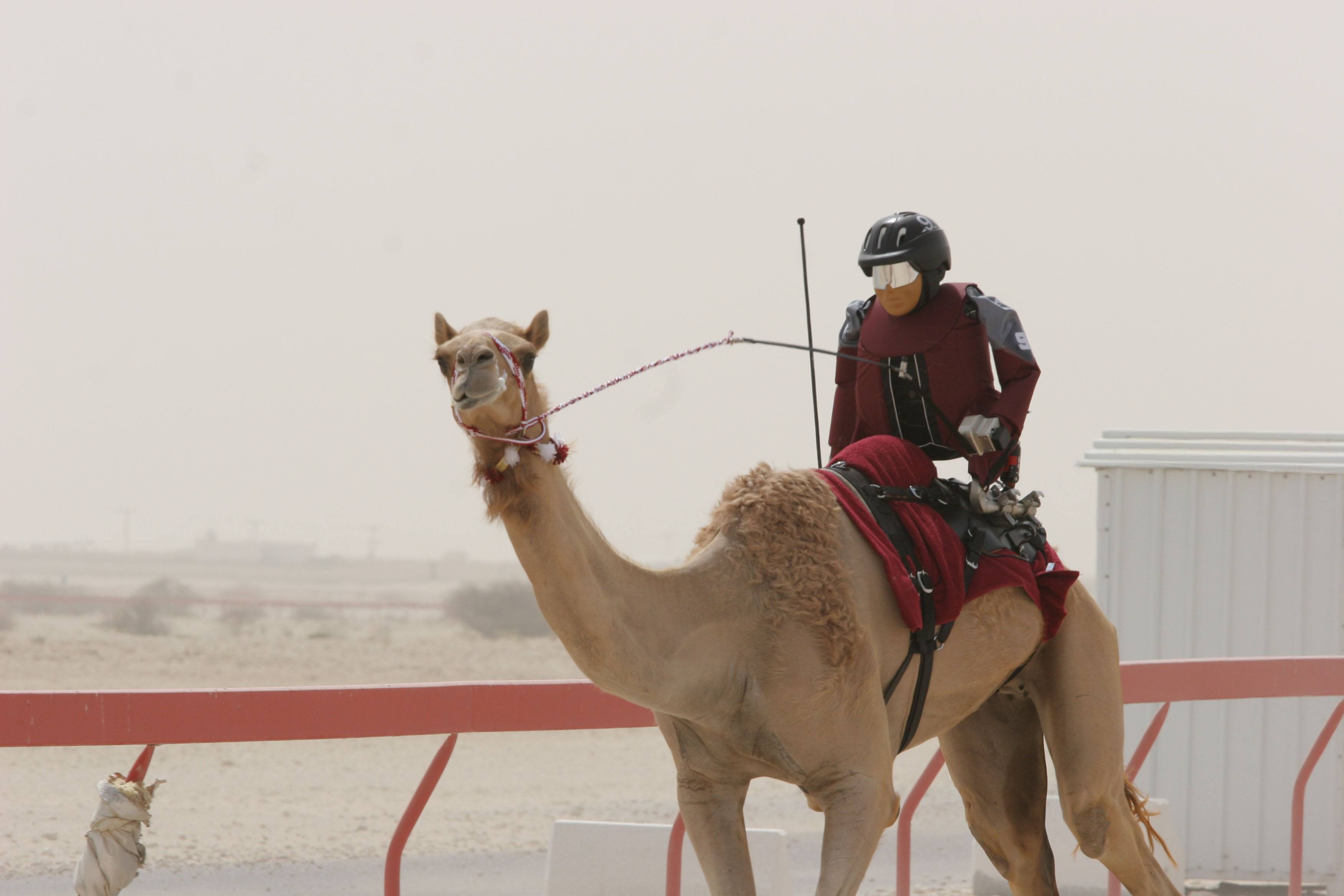 Wipping Machine Mail: Towards A More Benign Camel Racing Robot